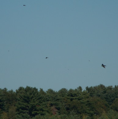 close up of birds playing above cranberry bog