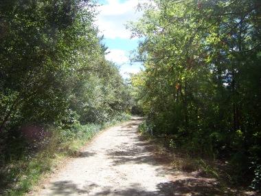 sandy road thru burrage wildlife management area