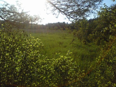 view from observation post in camp wing conservation area