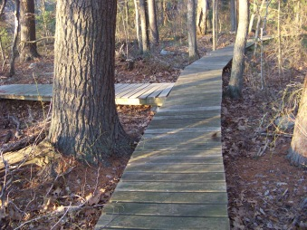 trail splits at canoe club trail