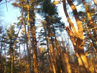 looking thru the trees on the canoe club trail in pembroke