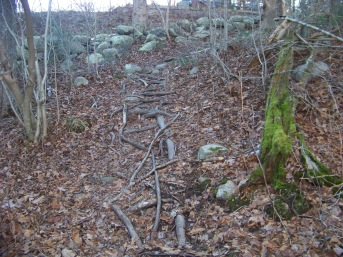 root filled end of trail at canoe club preserve