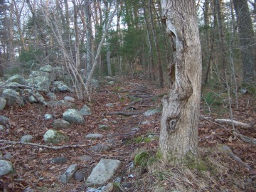 difficult to navigate trail  on canoe club trail