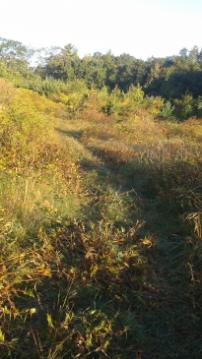 cut grass trail through meadow at centennial park