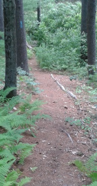 a blue blazed hiking trail at thaddeus chandler sanctuary
