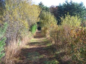 clark's bog trail in hanover