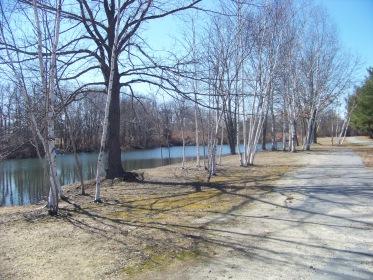 birch lined walkway on Colebrook blvd