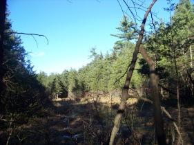 quaking sphagnum bog at cranberry pond