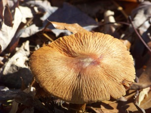 mushroom at cranberry pond conservation