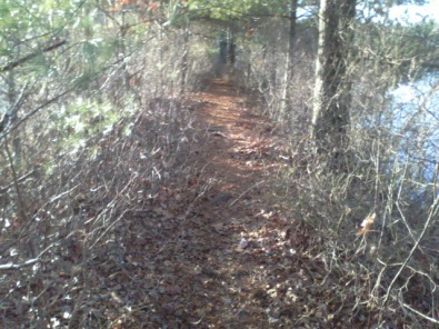 trail behind cranberry bog at crowell conservation
