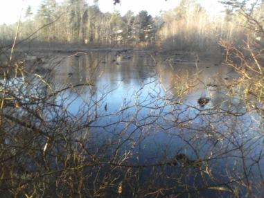 back bog pond at crowell conservation