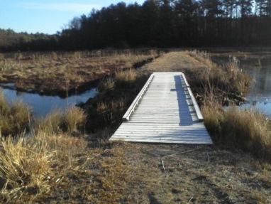 bridge through cranberry bog at crowell conservation