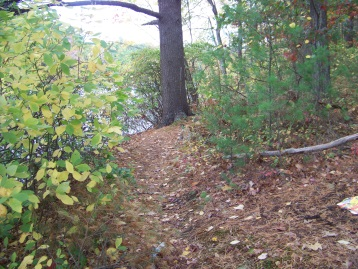 hiking trail near shoreline of cushing pond in cushing woods