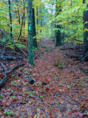 Green blazed trail