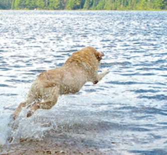 dog swimming available