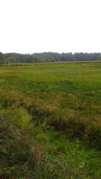 Long view of Duxbury Bogs