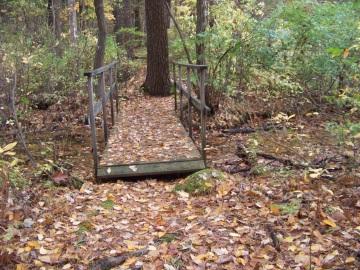 small bridge in eel river woods