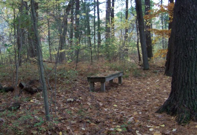 one of several benches at eel river woods in hingham