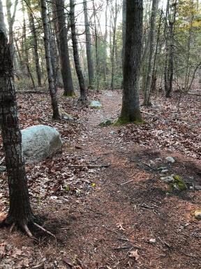 Ellis Estate hiking trail
