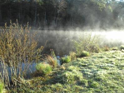 misty pond at ellis nature sanctuary