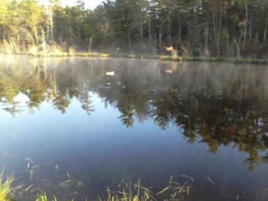duck in pond at ellis nature sanctuary