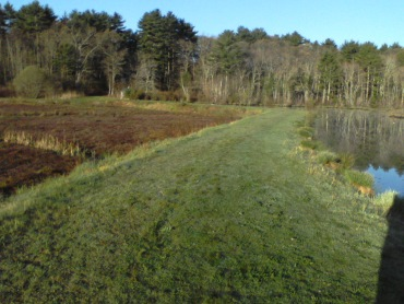 grassy hiking trail at ellis sanctuary