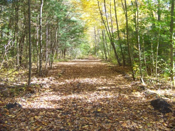 rockland rail trail in fall