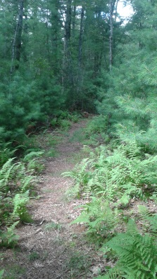 fern to pine trail at stetson meadows in norwell