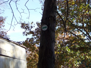 green arrow navigation on hiking trails in Hanover