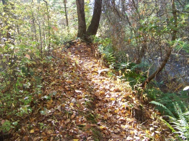 narrow trail along ridge above Drinkwater River