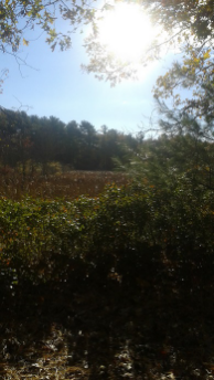 view of marsh on flaherty trail