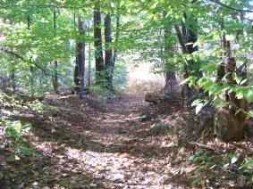 cart path on french's stream trai