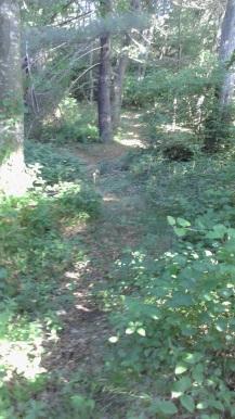 Winding Mack Trail in George Ingram Park.