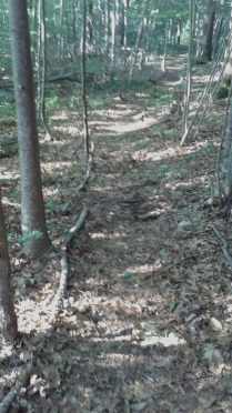 Hiking trail lined by forest material.