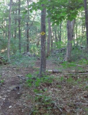 End of the loop trail at George Ingram Park