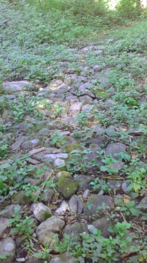 Rocks on trail appear to be glacial til but too organized.
