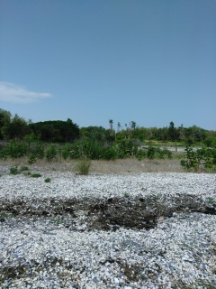 Shell filled beach at Grape Island