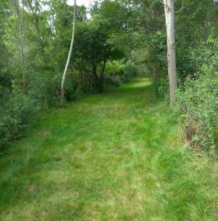 Wide easy hiking trails on Grape Island