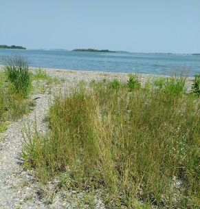 Beach access trail at Webb Memorial Park for Grape Island kayak trip.
