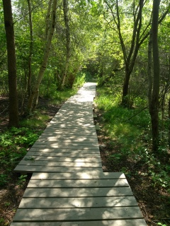 Boardwalk near the campsites on Grape Island.