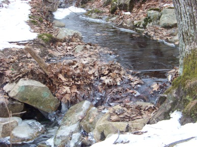 stream that feeds the marsh at great brewster woods