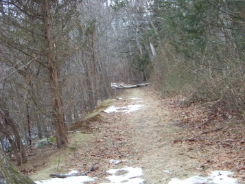 cart path along the marsh viewed from great brewster woods