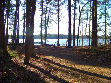 Beautiful grove at great pond
