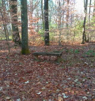 A bench at Twin Hawks Campsite in Hanson Veterans Memorial Town Forest.