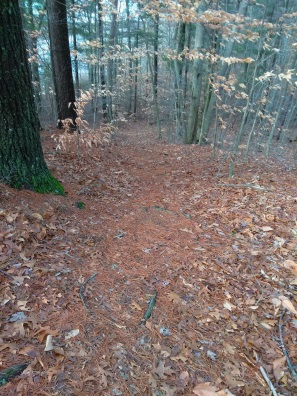 Hiking trail leading into a campsite area at Hanson Town Forest.