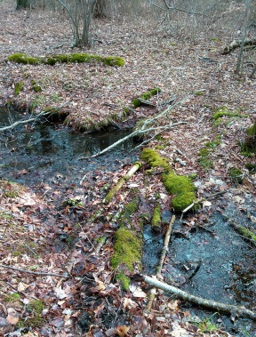 Makeshift bridge across a stream in the Hanson Town Forest.