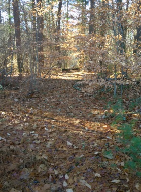 Tree fallen across a hiking trail in Hanson Veterans Memorial Town Forest.