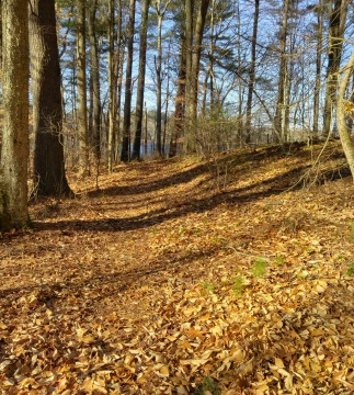 Hiking trail runs close to a small esker.