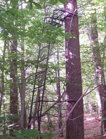 tree stand at edge of Burnt Plain Swamp