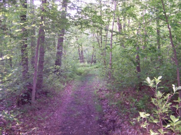 woodland trail turns grassy at hatch lots conservation area